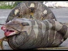 Dangerous Snakes eating Humans|snakes|dogs|animals