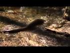 World's Deadliest Snakes   Nature Documentary