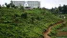 Sri Lanka : vers Tea Factory (Samsung NX10)